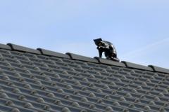 Katze_Dach
