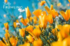 Frühlingsanfang News
